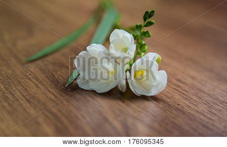 single flower white freesia on a warm wooden background