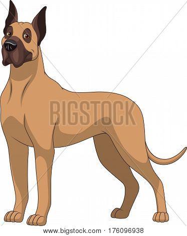 Vector illustration, funny purebred dog, German dog, on a white background