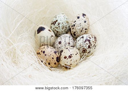 Easter Quail Eggs In Nest Close-up.