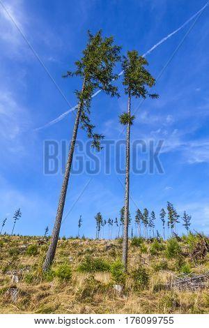 Broken Forest In Tatra Mountains, Slovakia