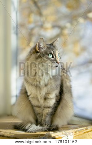 Gray cat sitting on a sunny day time on a balcony happy cat domestic cat