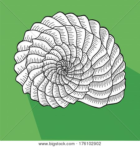Sea shell. Line work. White Shell snail on a green  background.