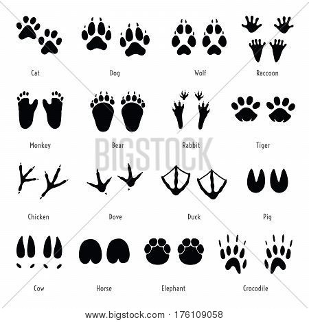 Foot trail vector. Animal birds and reptile footprint set. Collection of foot wild animal prints. Black different silhouettes of tracks with captions.