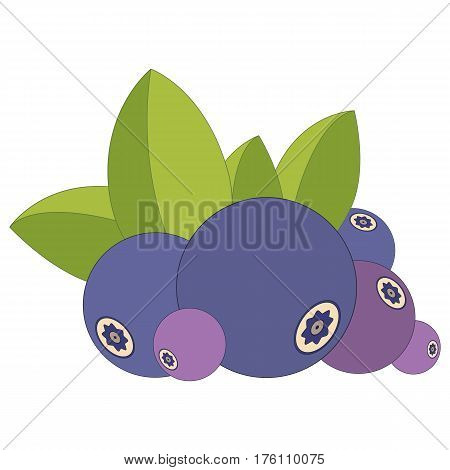 Heap of blueberries and leaves isolated on white. Vector illustration logo or tag of ripe blueberry and green leaf