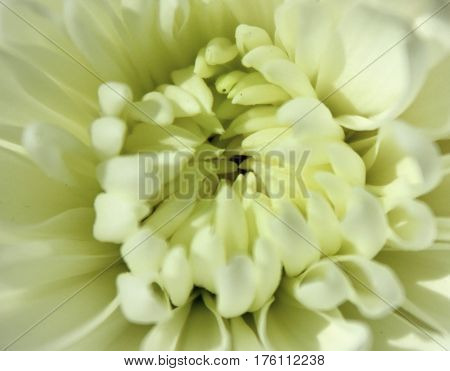 Macro image of the pistil of a white flower