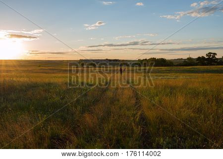 Traveler Walks Along The Prairie In The Rays Of The Setting Sun