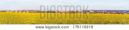 Large wide panorama of the southern residential district of Belgorod city. White city Russia. Skyline of the city on hills behind a sunflowers field