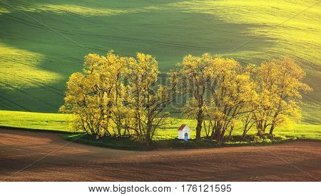 Colorful summer sunrise. Green meadow and trees in warm morning sunlight. White chapel in morning light. Bright summer background.
