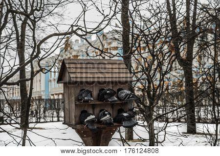 Pigeons In Front Of The Catherine Palace In Tsarskoye Selo In Tsarscoe Selo, Pushkin, Saint Petersbu