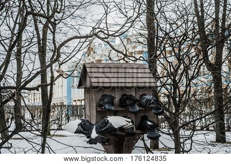 Pigeons In Front Of The Catherine Palace In Tsarskoye Selo, Pushkin, Saint Petersburg