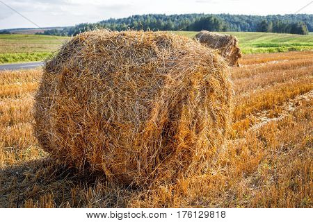 round bale hay against the background of the autumn field