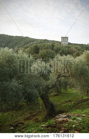 Olive Trees And A Ramshackle Tower On Greece