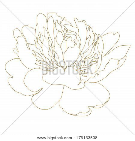 Graphical peony flower, golden peony flower, sketch peony flower, bud peony flower, plant peony flower.  Vector.