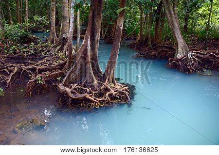 Mangrove forest in blue water in Thailand Krabi