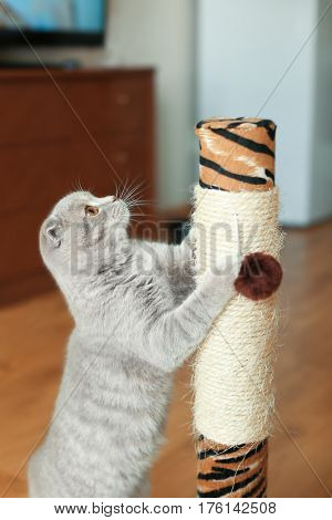 Cute cat sharpening claws on scratching post
