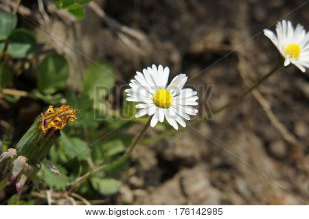 Great macro shooting a camomile. Extremely bright and white petals.