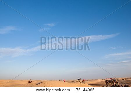 Safari in the desert. Caravan of camels on a rest