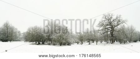 Snow landscape in a park in Magdeburg in winter.