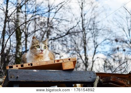 Fluffy spotted stray cat sitting on a pile of debris and planks.