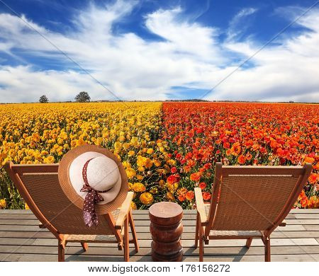 Elegant women's straw hat hanging on a deck chair. Couple wooden convenient a chaise lounge near the field of buttercups.  Concept of recreational tourism