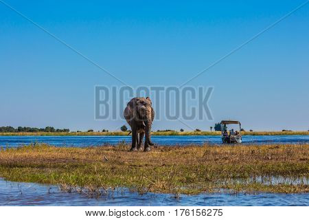 Fascinating journey to Africa. Tourists with boats watching the elephant -  loner. Watering large animals in the Okavango Delta. Chobe National Park in Botswana