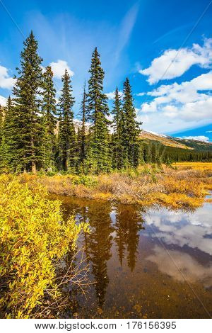 The boggy valley in the Rocky Mountains of Canada. The concept of eco-tourism and active tourism