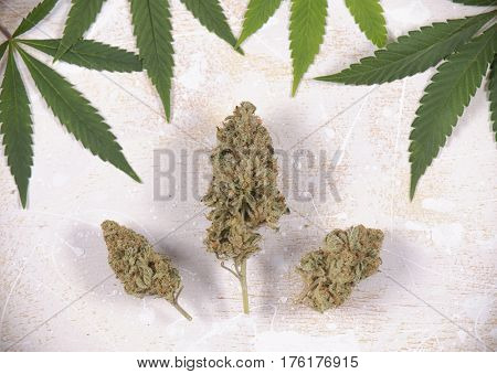 Cannabis buds (Mangolope strain) with pot leaves over white wood - Medical marijuana background