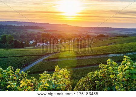 Champagne Vineyards at sunset Montagne de Reims France