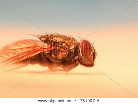 Extreme close up shot of fly