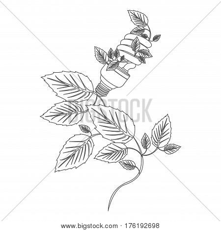 grayscale contour with spiral fluorescent bulb and creeper plant vector illustration