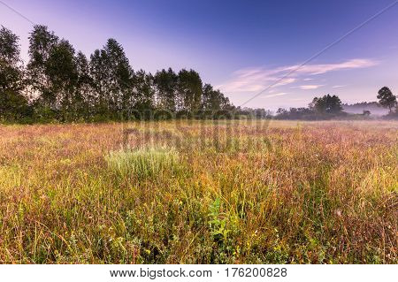 Morning Foggy Meadow In Polish Countryside
