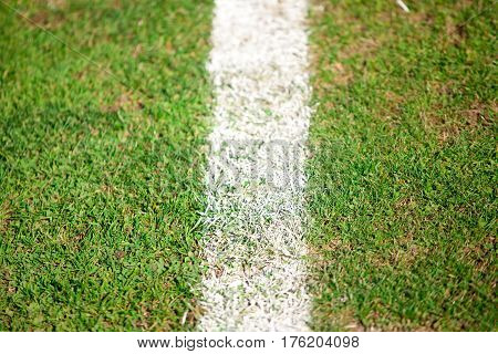 Green sports field with white line on the grass