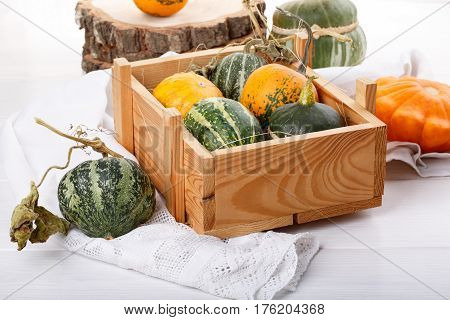 Little colorful ornamental pumpkins squash gourds. Decorative pumpkins. Mini gourds on white. Cucurbita pepo.