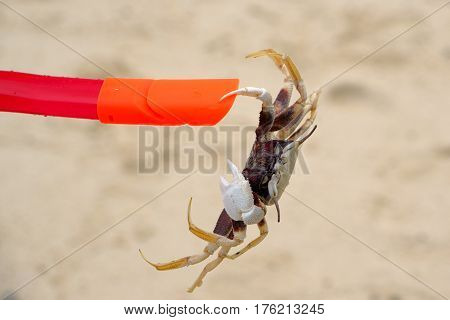 The  crab claws clutched the plastic tube