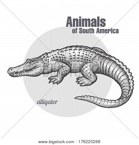 Caiman hand drawing. Animals of South America series. Vintage engraving style. Vector illustration art. Black and white. Object of nature naturalistic sketch.