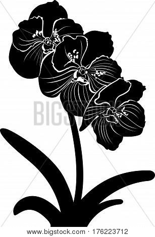 orchids. orchid flower branch vector isolated. botany poster