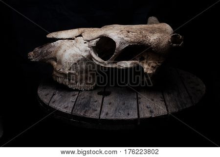 Cow/bull skull on a old grey wooden table.
