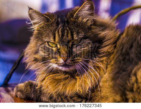 cat. Cat portrait close up only head crop