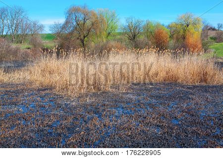 ecological disaster with burnt natural area with dry plants