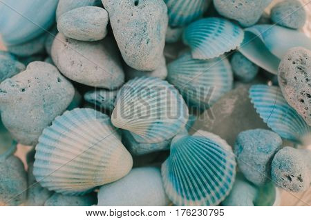 Macro view of seashells. Seashell background. Texture of blue seashells.