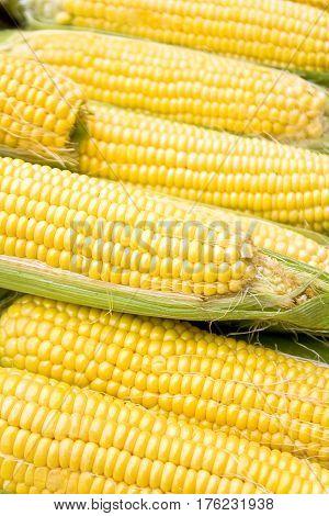 Fresh yellow corn on cob  as background
