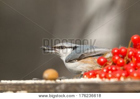 The photograph depicts nuthatch on the branch