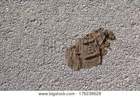 Footprint In Dog Doo