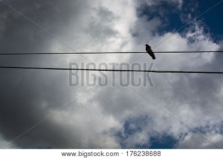 Lonely bird on telephone line in Mallorca Balearic islands Spain in February.