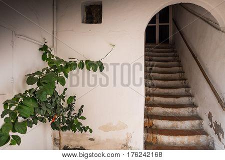 Bolgheri, Leghorn, Tuscany - Scale Ancient Dwelling, Italy