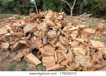 A Lot Of Spruce Tree Firewood Outdoor