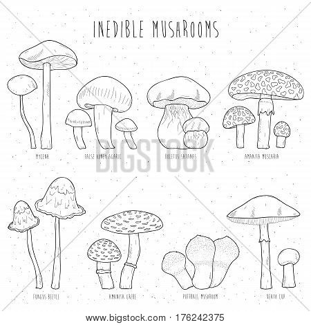 Set of inedible mushrooms with titles on white background, Hand drawn vector illustration collection.