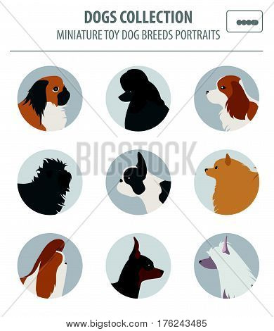 Dog Breeds_70