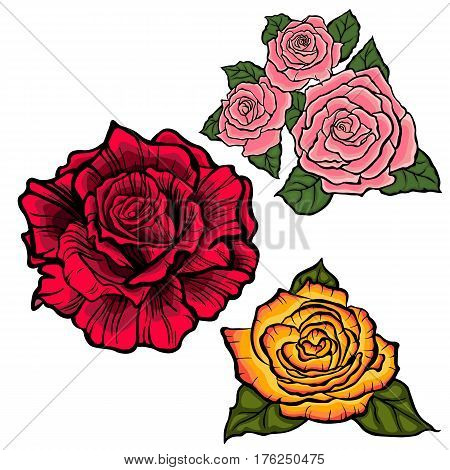 Flower set with red,orange and pink roses. Black lined roses, colored roses.