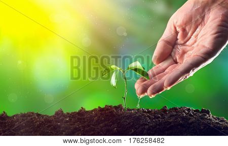 Farmer's hand watering a young plant. Young plant growing in the morning light, new life growth. Ecology, money saving, development or business concept.